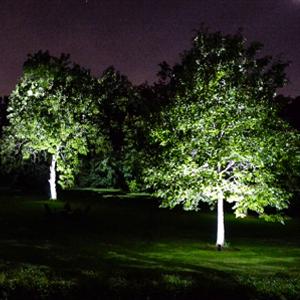 Eclairage arbre avec encastré du sol